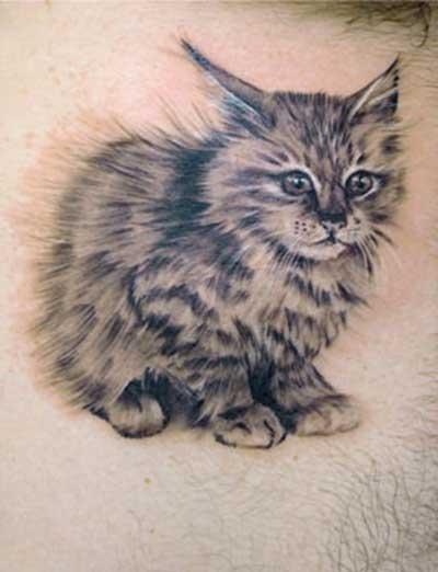Dicas de Tattoos de Gatos