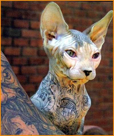 Ideias de Tatuagens de Gatos